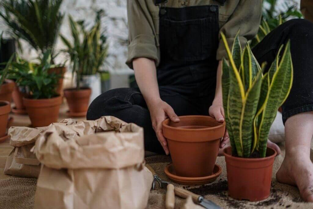 Nieodpłatne zdjęcia stockowe: przykład do artykułu o uprawie roślin (Pexels)