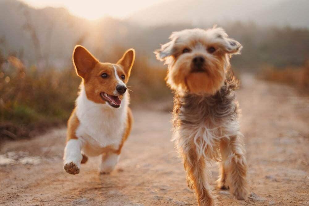 Nieodpłatne zdjęcia ze stocka: przykład do artykułu o psach (Unsplash)