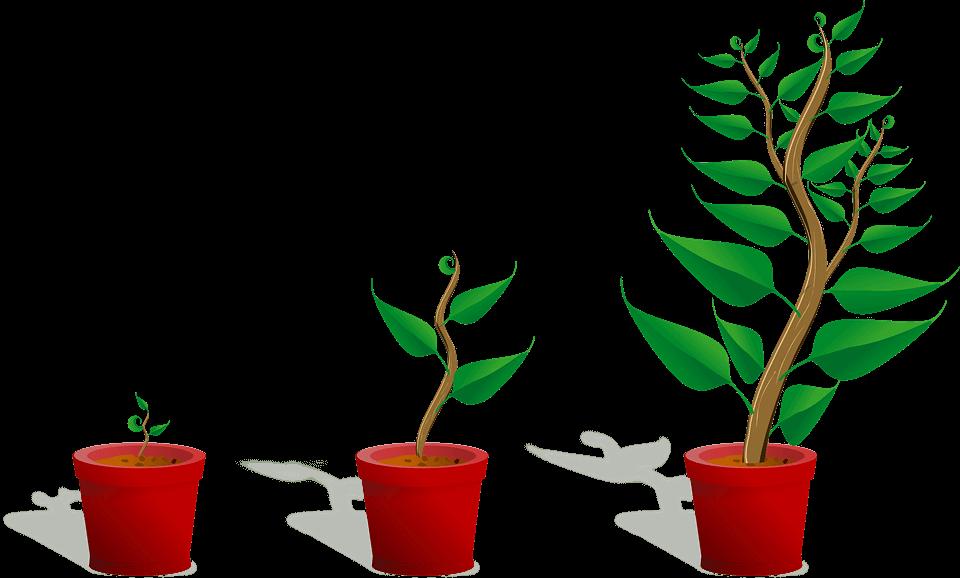 Evergreen content przykłady